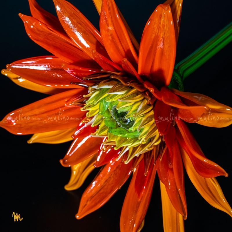 Гербера оранжевая-5