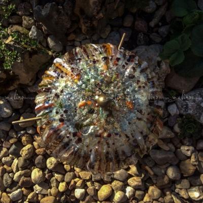 Медуза – примеры ранее выполненных работ